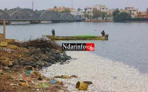 Gestion durables des ressources marines : un acteur appelle à un changement de comportement