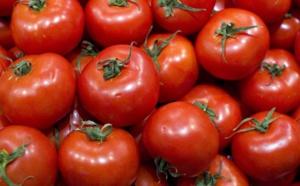 Saint-Louis : Ouverture d'une usine de production de tomates en octobre