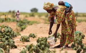Validation d'un plan d'urgence de 11 milliards CFA pour la période de soudure