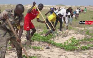 Une mobilisation citoyenne reboise le littoral et la mangrove du Parc National de la Langue de Barbarie (vidéo)