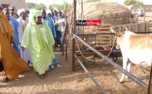 TVA SUR LE LAIT – MINI-FERMES LAITIÈRES DE LA LDB : Aminata Mbengue NDIAYE apprécie les grands enjeux de son secteur à DAGANA (vidéo)