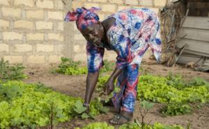 Saint-Louis : mise en place d'un réseau national des épicentres du Sénégal