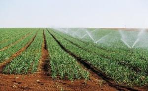 """"""" La campagne agricole sera bonne """" ( ministre)"""