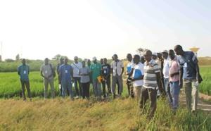 Déficit pluviométrique : le Directeur de l'Ancar Dagana affiche son inquiétude