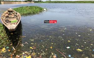 BANGO : dangereuse propagation des plantes envahissantes !
