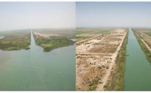 Saint-Louis : Reforestation de l'aire des 3 marigots