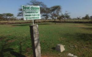 Les problèmes de délimitation des forêts classées évoqués à Saint-Louis
