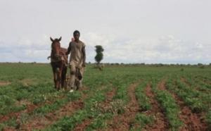 """Impact Covid-19: """" Les agriculteurs sont les moins touchés"""" ( rapport Ansd)"""