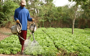 """""""Piesan"""", une réponse à l'insécurité alimentaire par la promotion de l'horticulture"""