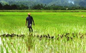 Secteur agricole dans la vallée du fleuve Sénégal, quel potentiel pour les jeunes?