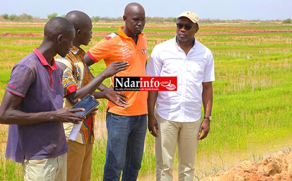 ENTREPRENEURIAT : l'engagement « révolutionnaire » de ces jeunes agriculteurs du WALO (vidéo)