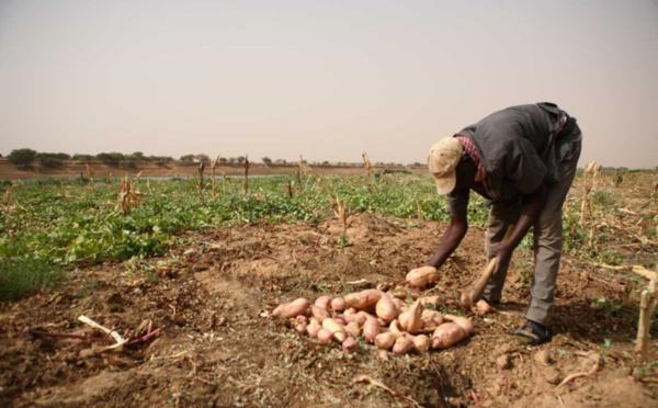 Saint-Louis parmis les quatre régions où vivent les Sénégalais les plus mal nourris.