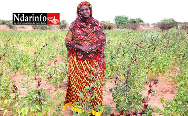FIERTÉ DE NDAR – Adja Ndèye Fatou SALL, fille de Serigne Abass SALL : une entrepreneure modèle !