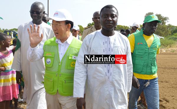 Coopération Sénégalo-Sud-coréenne : le village de Ndombo Alarba expose les réalisations du projet SAEMAUL