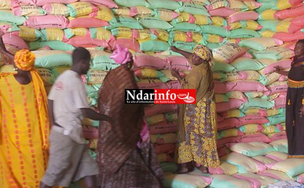 (Vidéo) D'importants stocks de riz dans la vallée : consommons local pour sauver nos braves producteurs !