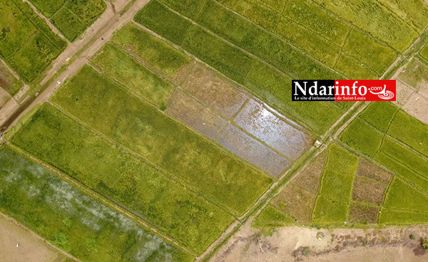 RIZICULTURE : 330 ha aménagements de la KOICA boostent le secteur à PODOR ( vidéo )