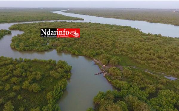 Top 5 des plus belles mangroves de Saint-Louis