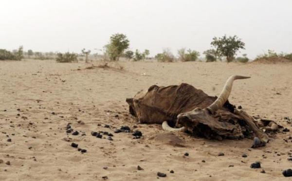 Rareté de l'eau potable à Niassanté dans le Dagana : La population frustrée lance un appel à Macky Sall