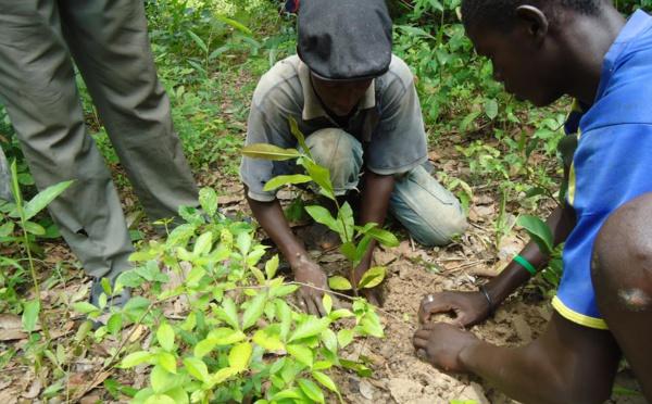 Gestion des ressources forestières : L'ONP/ bois s'engage à coté du ministère de l'environnement à reboiser 10.000 arbres par région.