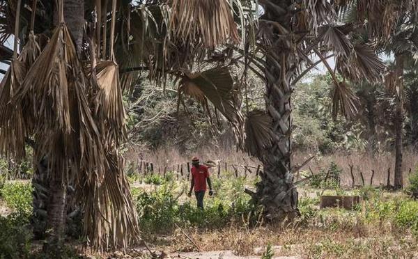 Mame Mbaye Niang sur le viol des touristes espagnoles : «cet acte odieux n'a rien à voir avec l'hospitalité des Casamançais»