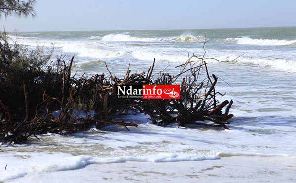 GANDIOL : ouverture d'un forum sur les impacts de la brèche, ce 31 mars à Tassinère.