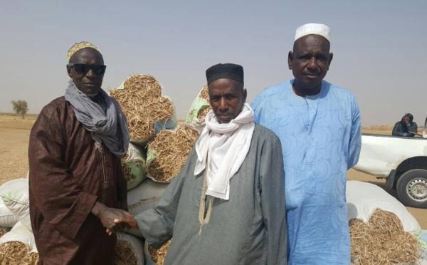 Appui aux éleveurs de Ronkh et Gnith : des pailles d'arachide offertes au bétail ( Photos)