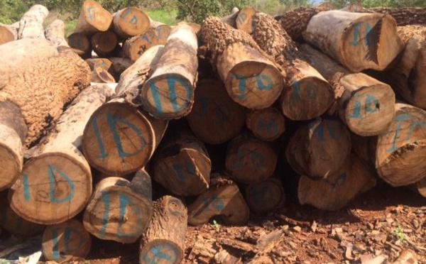Révision du code forestier : Une peine entre 4 et 5 ans d'emprisonnement contre les coupeurs illicites de bois