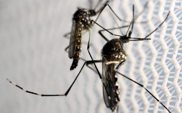 Fièvre de la dengue : les symptômes, le traitement et les mesures de prévention ( vidéo)