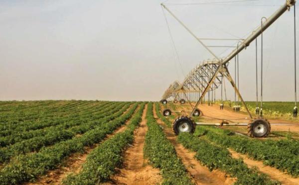 FORMATION : le LTAP de Saint-Louis mise sur l'agriculture