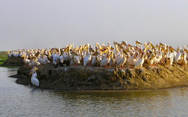 Dakar et Nouakchott préoccupés par la réserve de biosphère du Delta