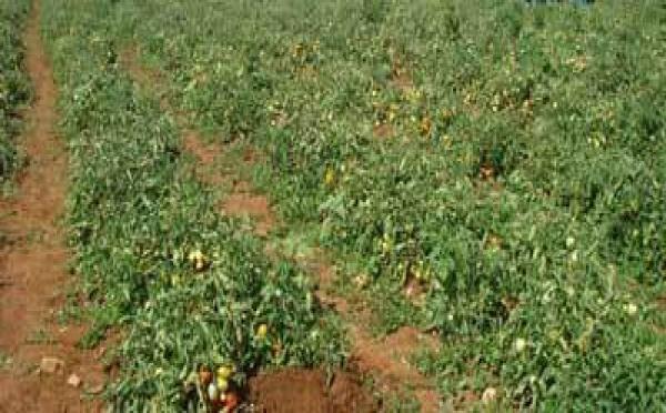 Pour une meilleure couverture des risques agricoles: Un  Partenariat CNAAS/FSAD scellé dans la vallée