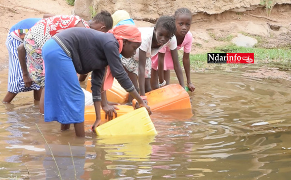 Manque d'eau potable : le Djoudj et ses environs très touchés (vidéo)