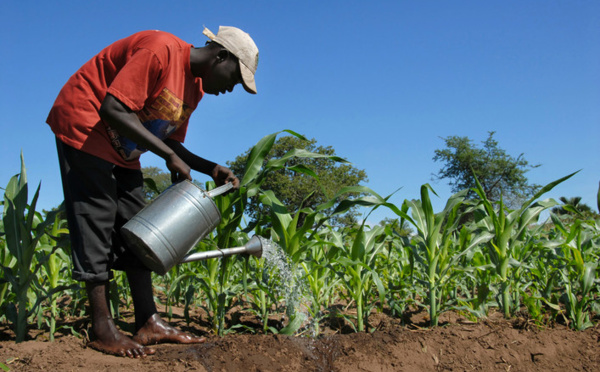 L'agriculture intelligente, une réponse aux effets des changements climatiques, selon un officiel