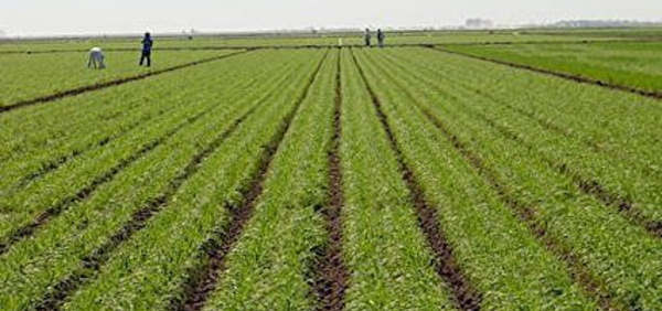 """""""Toutes les conditions réunies pour une bonne campagne agricole"""", assure le ministre Moussa BALDÉ"""
