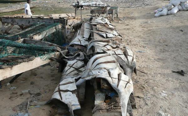 Manque de Poisson à Saint-Louis : « La mer est poissonneuse mais sale », « les bateaux industriels déversent des produits toxiques en mer »