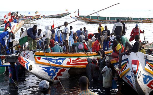 Débarquements de pêche : Faible baisse enregistrée à Saint-Louis