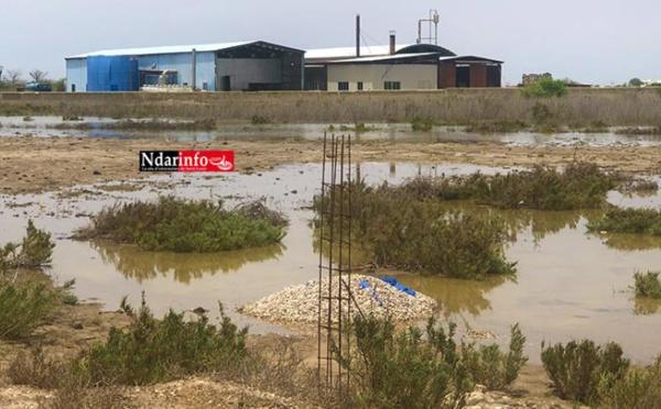 Sénégal : Greenpeace Afrique exige l'arrêt de l'attribution d'autorisations aux unités de production de farine de poisson