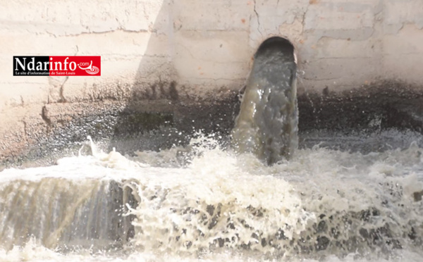 Pollution de l'Usine chinoise Sea Production : GREEN PEACE Afrique dénonce (vidéo)