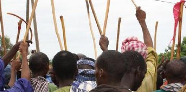 Podor : Un mort dans des affrontements entre agriculteurs et éleveurs