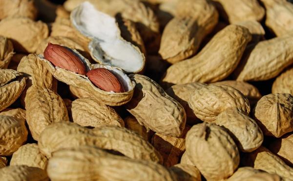 Commercialisation de l'arachide : La Sonacos octroie une prime au tonnage pour contrer la concurrence