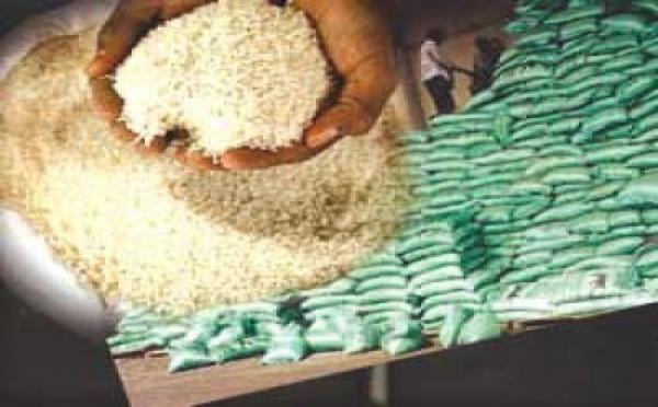 Compétitivité dans la culture du riz : Le Sénégal plus performant que la Thaïlande