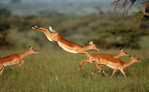 Visite d'échanges à la Réserve de Gueumbeul: Réintroduction réussie de 4 espèces de gazelles