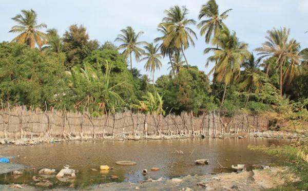 Bango : les oiseaux du 'lac' avant sa disparition.