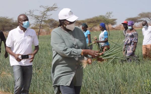 RELANCE DE L'AGRICULTURE : Comment le PDIDAS booste des initiatives locales (vidéo)