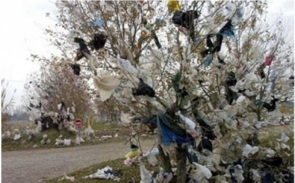 Sénégal-UGB : Des scientifiques soulignent les dangers du péril plastique sur l'environnement.
