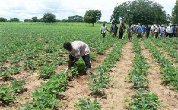 Saint-Louis - Campagne agricole 2013/2014: 14 milliards de l'Etat pour subventionner l'acquisition des engrais.