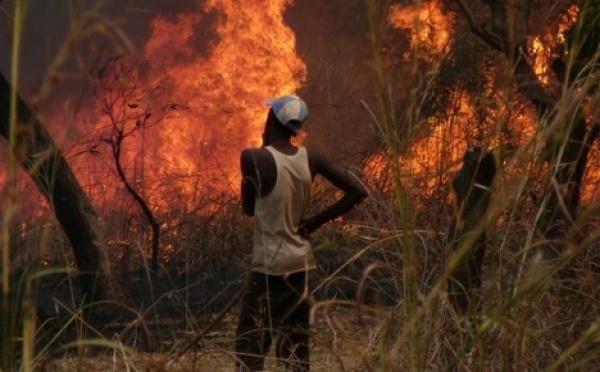 Journée Nationale de l'Arbre: Zéro feu de brousse enregistré à Saint-Louis.