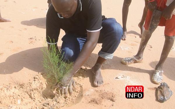Écosystèmes dégradés par la brèche : Lancement d'une nouvelle campagne de reboisement (vidéo)