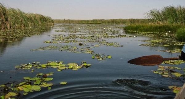 Saint-Louis - Réserve naturelle de Tocc Tocc : Un paradis de lamantins menacé par la pollution chimique