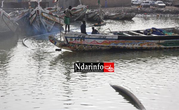 ALERTE : les piroguiers heurtent la conduite d'eau de Guet-Ndar (photos)
